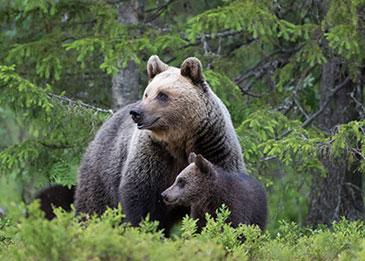 aktiviteetti karhunkatselu